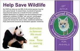 save our wildlife college essay   cyber essays all essay short essay on wildlife  words