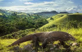 Reptile Size Range Britannica