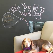 office pet ideas. To Celebrate Take Your Pet Work Day, We Asked Our Office Pets What Their Favourite Part Of Coming Is! Ideas O