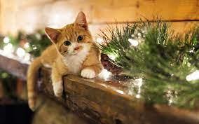 1920x1200 Christmas Kitten desktop PC ...