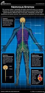 Is There A Scientific Truth Behind Our Feet Having Nerves