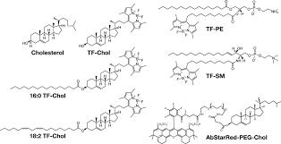 nanoscale dynamics of cholesterol in