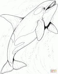 Small Picture Killer Whale Coloring Page qlyviewcom