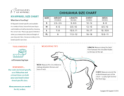 Teacup Chihuahua Size Chart Chihuahua Size Guide Voyagers K9 Apparel