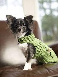 Dog Sweater Crochet Pattern Enchanting 48 Crochet Dog Sweater Patterns At DogCatPin