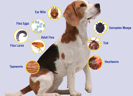 dog diseases prevention and treatment pictures of dogs and all  rabies rabies is a terrible disease that can be caused to any person including humans and animals rabies can be sp easily through contact of the