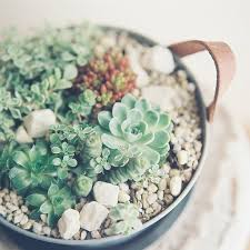 Decorating: Succulents Tea Cup Ideas - Succulents Garden