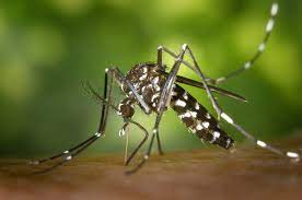 Chemical mosquito control : the only solution against the Tiger mosquito ?  | OMPE | Organisation Mondiale pour la Protection de l'Environnement