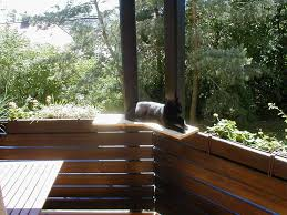 Fenster Sichern Katze Mesh Fenster Stockfotos Mesh Fenster Bilder