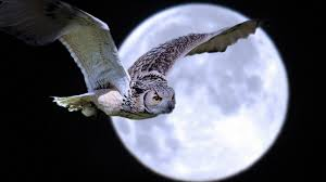 Image result for free images owl one eye