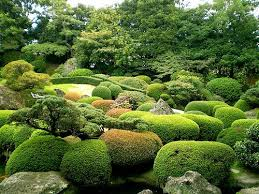 Small Picture 16 best evergreens images on Pinterest Hinoki cypress Garden