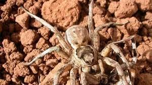 Giải mã bí ẩn: Lí do nào khiến nhện cái 'xơi tái' bạn tình trước khi giao  phối - Tạp chí Người Đưa Tin