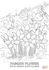 Small Picture South Dakota State Flower coloring page Free Printable Coloring