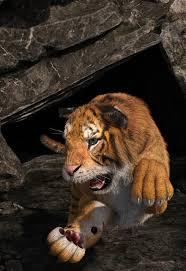 tiger face world