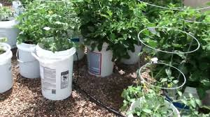 garden bucket. Garden Bucket R