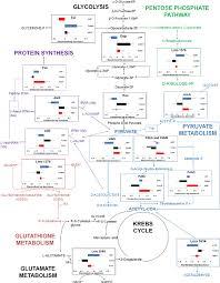 Schematic Metabolic Pathway Chart Involving Identified