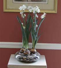 White Paper Flower Bulbs