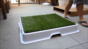 dogs bathroom grass. urban potty - the best designed dog for owner youtube dogs bathroom grass t