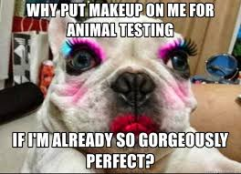 why put makeup on me for testing if i m already so gorgeously perfect pug with makeup meme generator