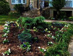 color garden. Winter Color Garden And Plants T