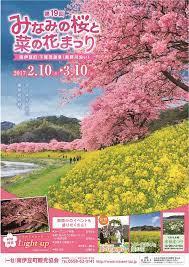 みなみ の 桜 と 菜の花 まつり