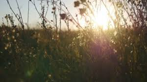 dry grass field background. Close Up Of Grass Field Flowers At Sunset Light. Colorful Nature Background. The Bright Sun Illuminates Dry Stock Video Footage - Videoblocks Background G