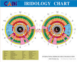 Ridology Chart Iridology Chart Left Eye Iridology Chart