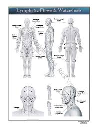 Lymph Flow Chart Lymphatic Flows And Watersheds Wall Chart