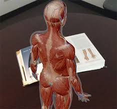 A large organ in the body which cleans the blood and produces bile (a bitter yellow liquid which helps to digest fat). Anatomy And Physiology Anatomical Position And Directional Terms
