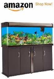 Fish Tank Sizes Choose The Best Tank Size Dimensions And More