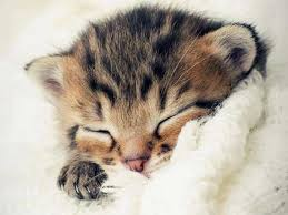 cute kitten pictures 1