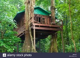 Jungle Treehouse Accommodation Stock Photo Royalty Free Image Treehouse Accommodation