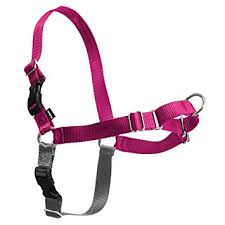 Petsafe Easy Walk Dog Harness No Pull Dog Harness Raspberry Gray Medium Large