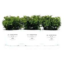 herb ...