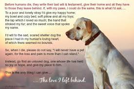 Quotes About Dogs Love Impressive Beautiful Old Dog Quotes