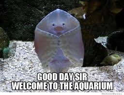 Welcoming Stingray | WeKnowMemes via Relatably.com