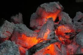 Cool Facts About Heat Keeping Warm Beyond Penguins And Polar Bears