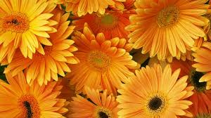 Orange Aesthetic Desktop Wallpaper ...