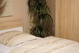 Pflanzen Im Schlafzimmer Besserer Schlafkomfort Das Schlaf Magazin