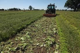 stop subsidies switch to organic farming business economy stop subsidies switch to organic farming business economy al jazeera