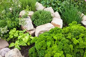 how to grow a herb garden. More Than 14 Million Households In The United States Grow Herbs\u2014in Vegetable And Perennial Gardens, Containers, Or On Windowsills. With Good Reason! How To A Herb Garden