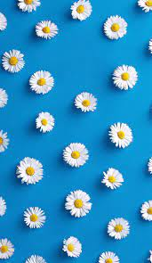 Free download Flower iPhone Wallpapers ...