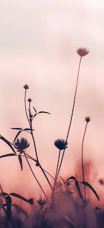 nf91-flower-nature-fall-romantic-old-pink