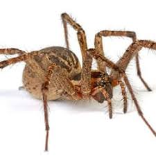 10 Interesting Facts About Wolf Spiders In Tennessee