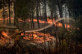 Is Fire Natural Light What Portugals Hellish Wildfires Can Tell Us About Forest