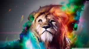 beautiful lion 4k hd desktop wallpaper for 4k ultra hd tv