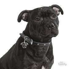 black american staffordshire terrier.  Black Picture Of Black American Staffordshire Terrier ID Dog Tag Inside A