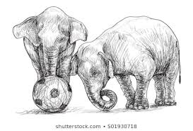 Baby Elephant Drawings Baby Elephant Playing Football Sketch Free Stock Illustration