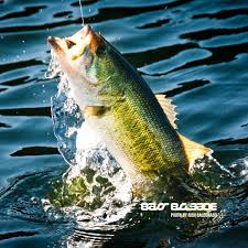 largemouth bass jumping. Simple Largemouth Image Result For Photo Of Largemouth Bass Jumping For Largemouth Bass Jumping L