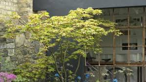 fuss free trees for small gardens